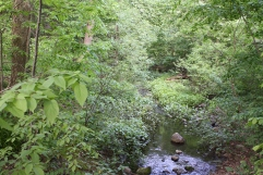 The brook of the Ambergill
