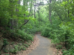 The path through the Ravine