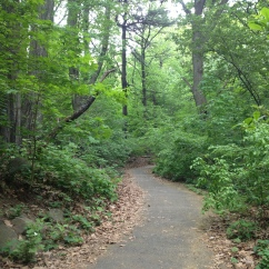 The path through the Ravine