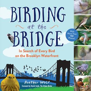 birdingatbridge