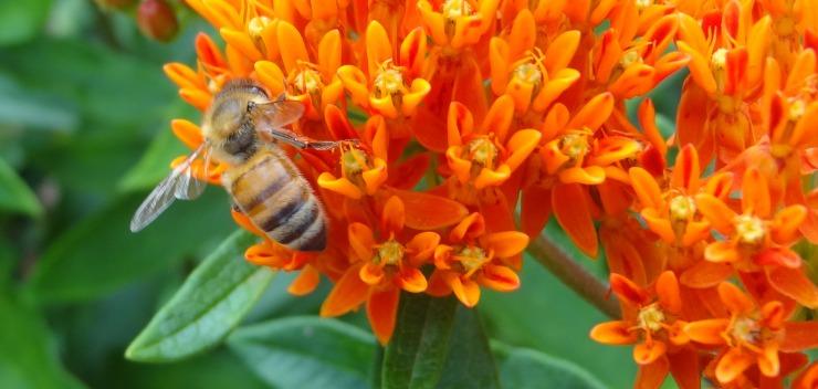 Honeybee_MartinLaBar