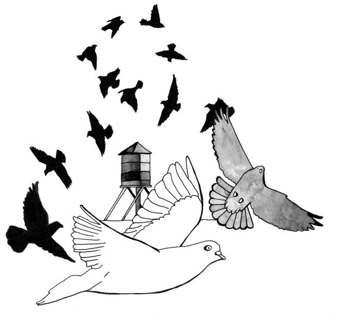 NSC-Pigeons_670