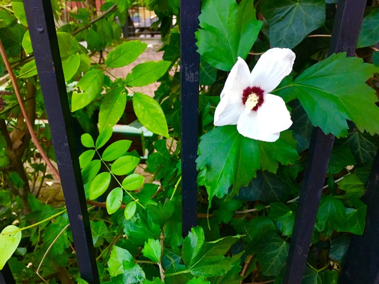 flowergate
