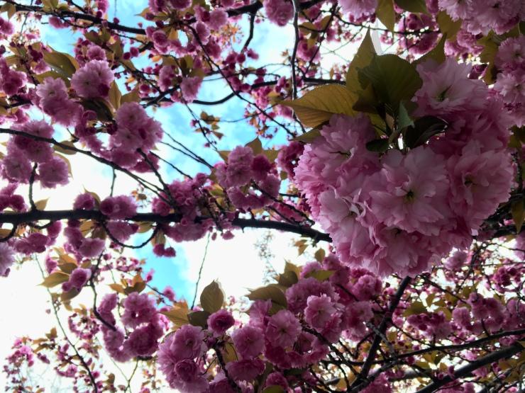 Photo Apr 29, 5 08 27 PM (1)